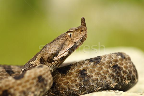 Primer plano femenino macro retrato hermosa serpiente Foto stock © taviphoto