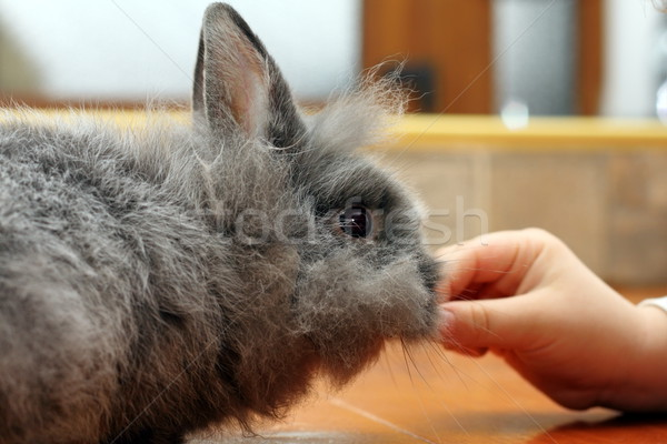 child hand feeding rabbit Stock photo © taviphoto