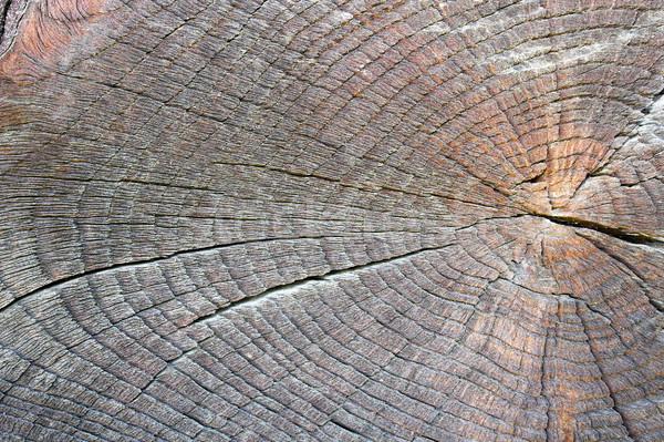 Textura cortar carvalho velho pronto projeto Foto stock © taviphoto