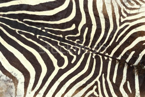 texture of zebra old pelt Stock photo © taviphoto