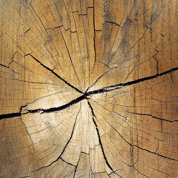 fir heart wood texture Stock photo © taviphoto