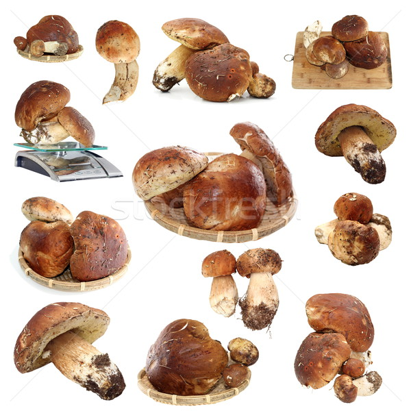 collection of fungi porcini ready for cooking Stock photo © taviphoto