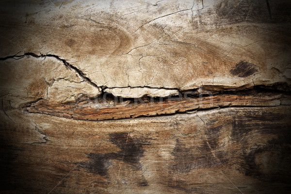 Pioppo legno screpolato texture pezzo più Foto d'archivio © taviphoto
