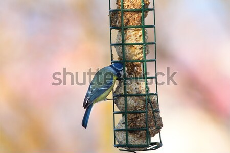 fight for food at lard feeder Stock photo © taviphoto