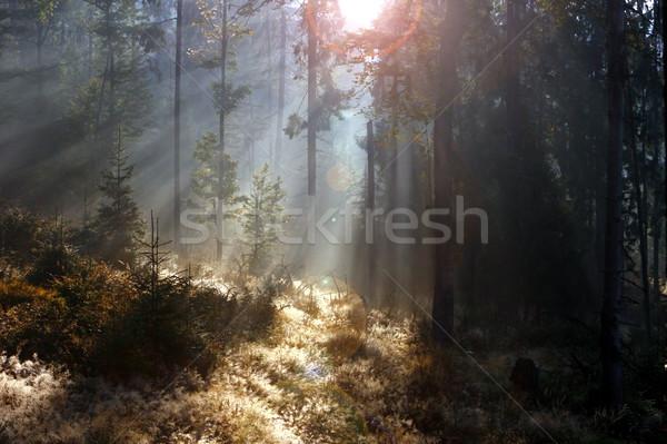 Enfeitar floresta nascer do sol belo manhã luz Foto stock © taviphoto