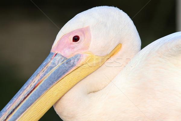 Groot water natuur achtergrond vogel Stockfoto © taviphoto