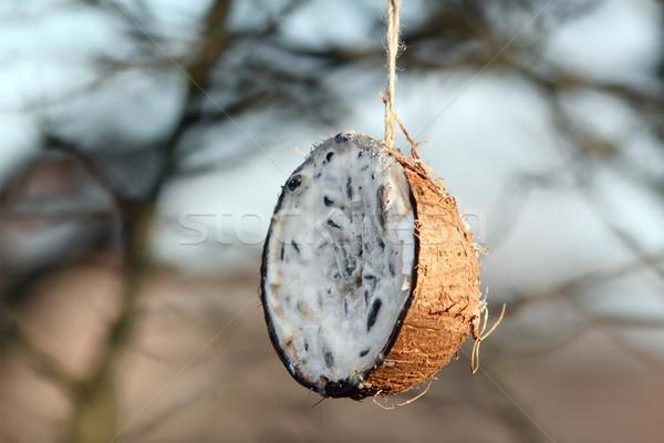 coconut feeder full of lard Stock photo © taviphoto