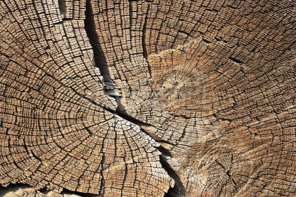 Seção transversal madeira textura de madeira anéis textura Foto stock © taviphoto