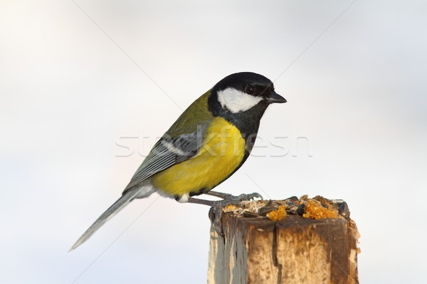 Stock photo: great tit on stump garden feeder