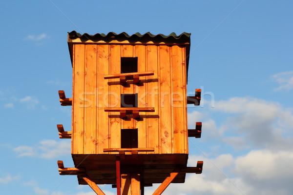 pigeon wooden house Stock photo © taviphoto