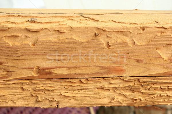 Huis kever aanval sparren hout oude huis Stockfoto © taviphoto