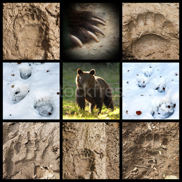Stock photo: collection of bear tracks