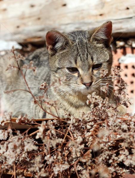 ленивый Китти кошки Постоянный старые стены Сток-фото © taviphoto