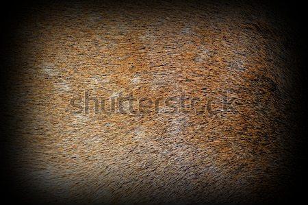Pelliccia camosci immagine tassidermia sfondo colore Foto d'archivio © taviphoto