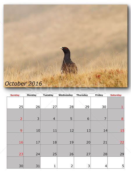 wildlife calendar october 2016 Stock photo © taviphoto
