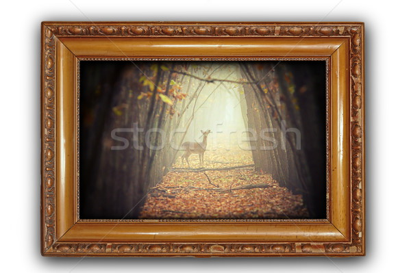 beautiful image with deer in wooden frame Stock photo © taviphoto