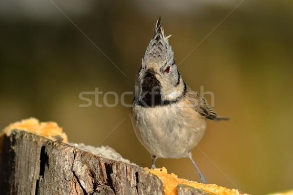 Engraçado teta floresta natureza animal Foto stock © taviphoto