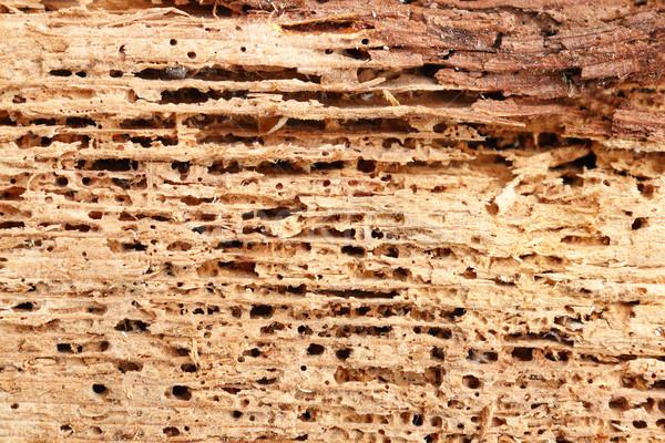 Detail hout beschadigd paddestoel insecten Stockfoto © taviphoto