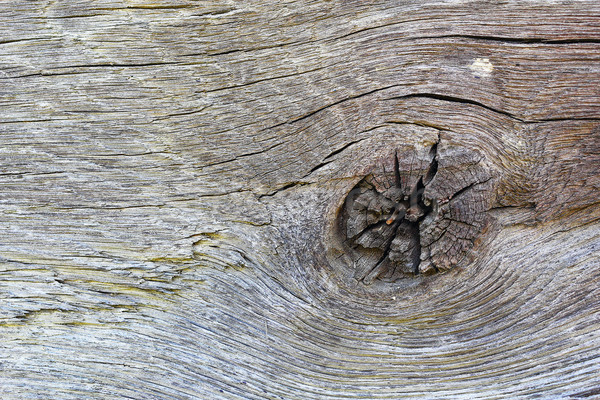 detail of knot on oak plank Stock photo © taviphoto