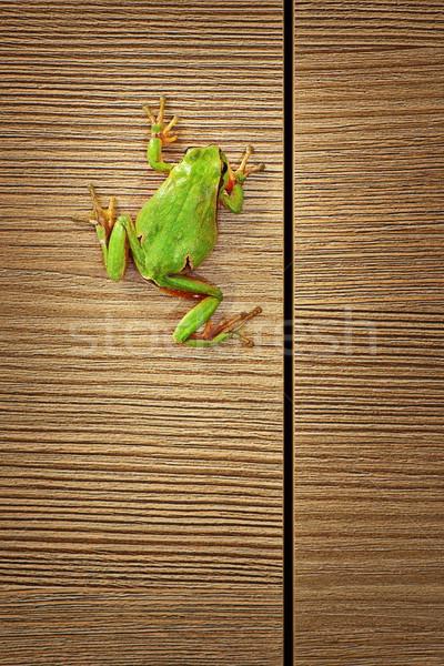 cute green tree frog climbing on wood Stock photo © taviphoto