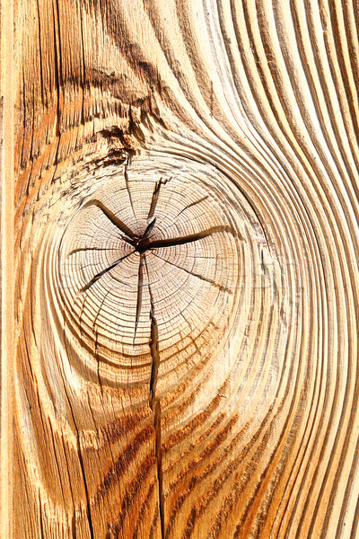 detail of wooden knot on spruce plank Stock photo © taviphoto