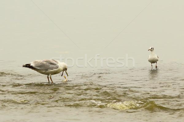 Połowów miejscu wody ryb charakter ptaków Zdjęcia stock © taviphoto