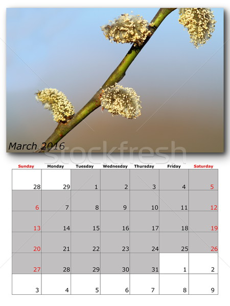 Stock photo: march nature calendar page layout