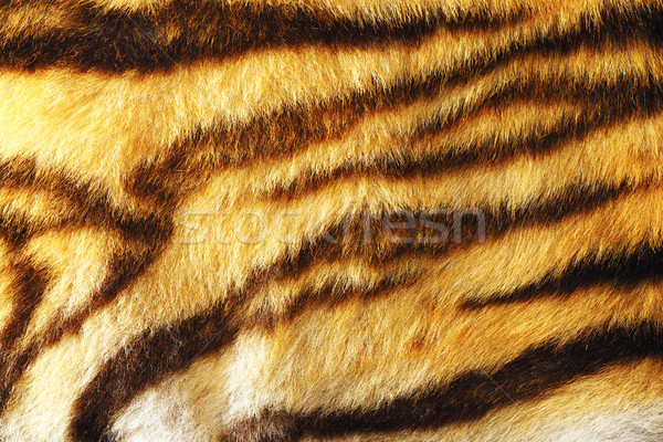 detail of colorful tiger fur Stock photo © taviphoto