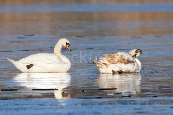 Kısmak ayakta dondurulmuş göl iki su Stok fotoğraf © taviphoto
