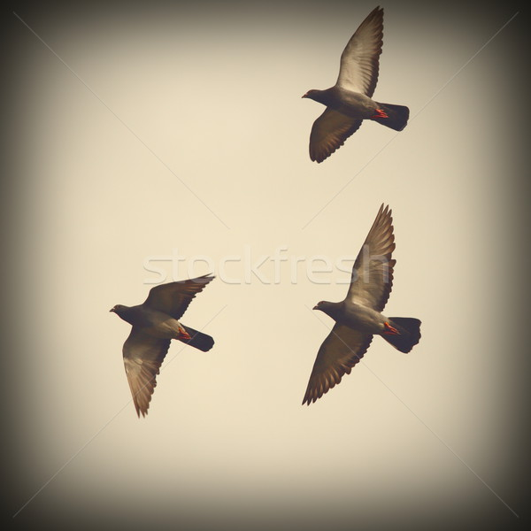 Tres vuelo día instagram efecto cielo Foto stock © taviphoto