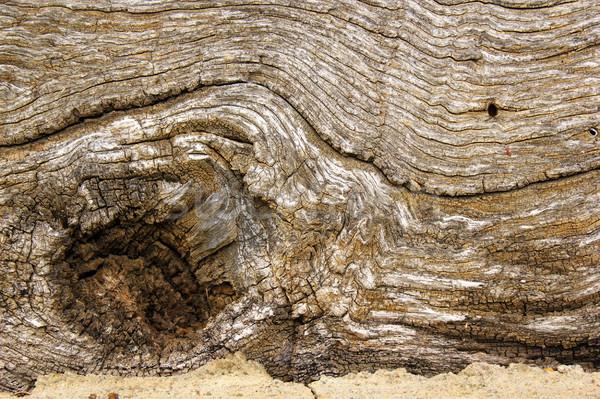 древних дуб совета поверхность интересный старые Сток-фото © taviphoto