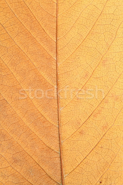 macro shot of faded leaf Stock photo © taviphoto