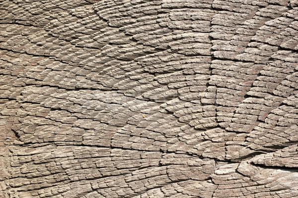 heart wood of oak stump Stock photo © taviphoto