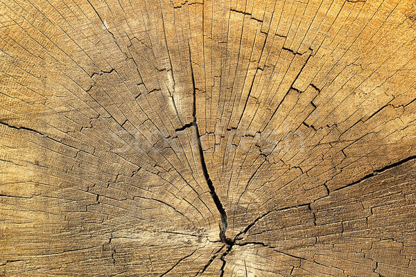 cracks on spruce wood Stock photo © taviphoto