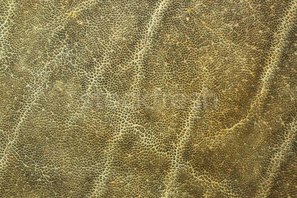 Détail peau naturelles animaux cuir Photo stock © taviphoto