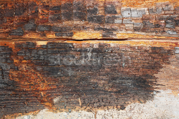 dry rot on old wood beam Stock photo © taviphoto