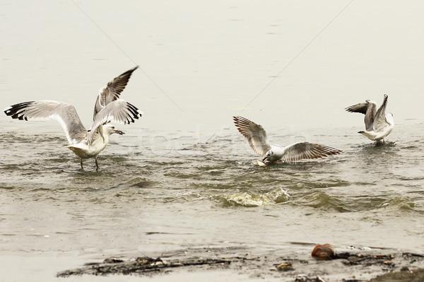 釣り スポット 食品 浅い 湖 ストックフォト © taviphoto