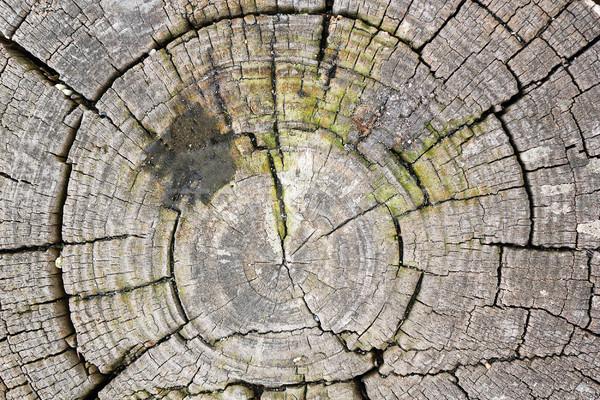texture of tree heart Stock photo © taviphoto