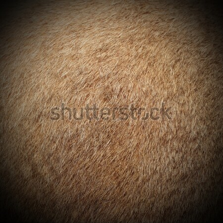 texture of dama fur Stock photo © taviphoto