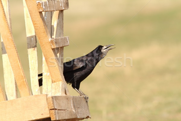 Stock photo: rook on wooden structure