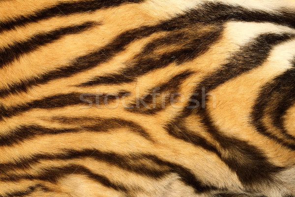 closeup on real tiger fur Stock photo © taviphoto