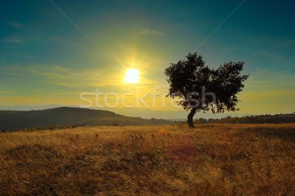 Solitário árvore madrugada colorido luz campo Foto stock © taviphoto