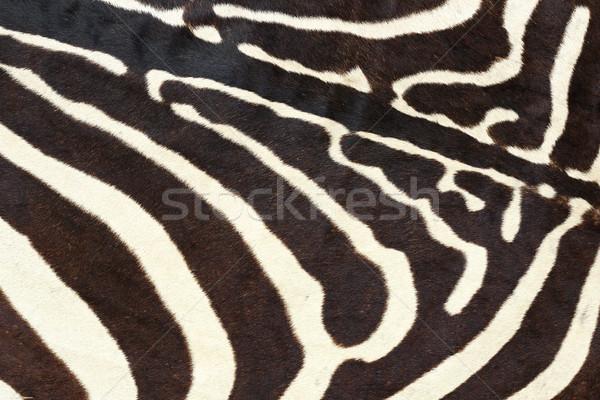 Textura zebra naturalismo animal pele Foto stock © taviphoto