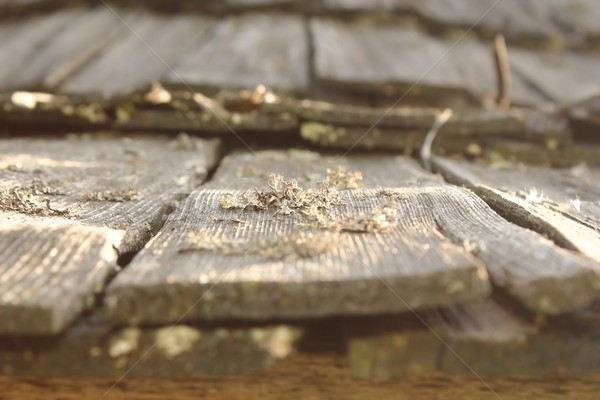 lichens and fungus on damaged wood roof Stock photo © taviphoto