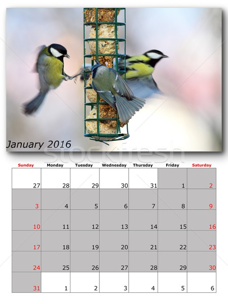 garden birds calendar january 2016 Stock photo © taviphoto