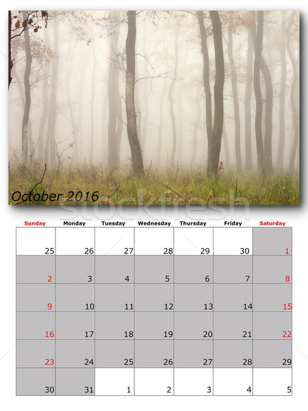 Stock photo: october nature calendar page layout