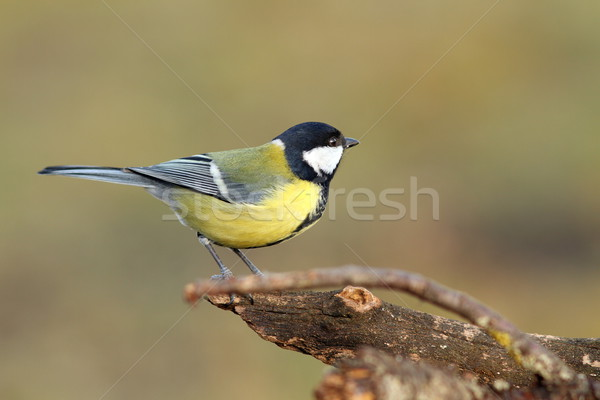 beautiful tiny bird in the garden Stock photo © taviphoto