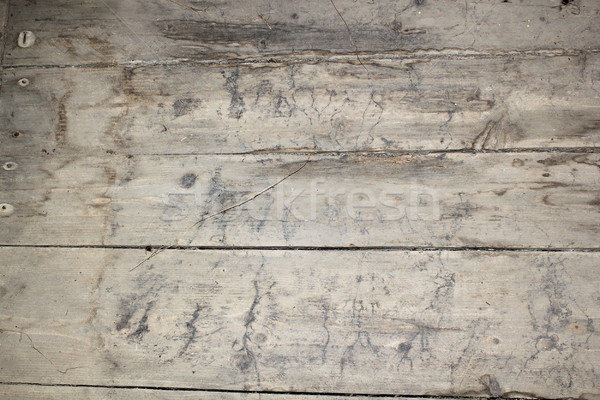 mycelium traces on basement floor Stock photo © taviphoto