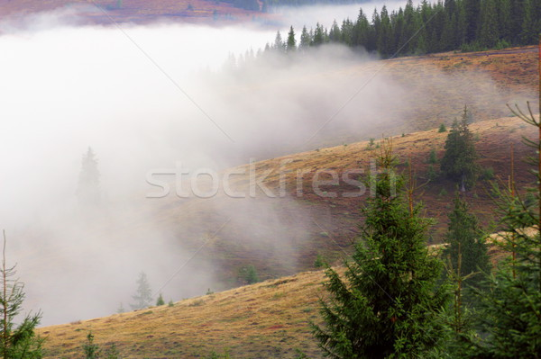 foggy autumn morning Stock photo © taviphoto