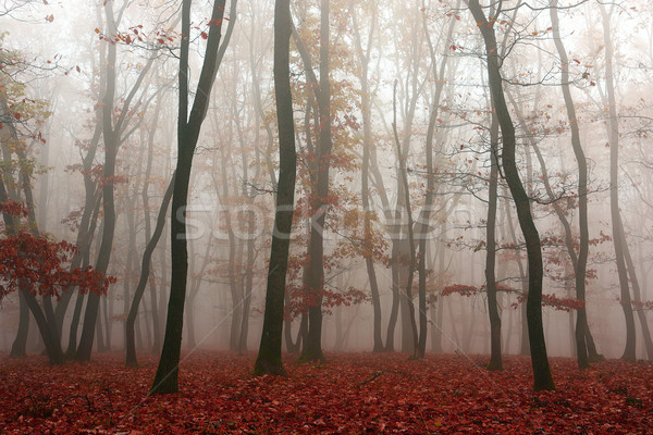 туман лесу закат природы свет Сток-фото © taviphoto